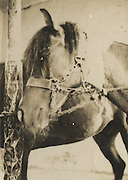 """Japanese Vernacular or """"Found Photograph"""":<br /> <br /> Horse gazing into camera<br /> 1930s<br /> Anonymous<br /> <br /> - Vintage original gelatin silver print. <br /> - Size: 1 3/4 in. x 2 1/4 in. (43 mm x 58 mm).<br /> <br /> Price ¥7000 JPY<br /> <br /> <br /> <br /> <br /> <br /> <br /> <br /> <br /> <br /> <br /> <br /> <br /> <br /> <br /> <br /> <br /> <br /> <br /> <br /> <br /> <br /> <br /> <br /> <br /> <br /> <br /> <br /> <br /> <br /> <br /> <br /> <br /> <br /> <br /> <br /> <br /> <br /> <br /> <br /> <br /> <br /> <br /> <br /> <br /> <br /> <br /> <br /> <br /> <br /> <br /> <br /> <br /> <br /> <br /> <br /> <br /> <br /> <br /> <br /> <br /> <br /> <br /> <br /> <br /> <br /> <br /> <br /> <br /> <br /> <br /> <br /> <br /> <br /> <br /> <br /> <br /> <br /> <br /> <br /> <br /> <br /> <br /> ."""