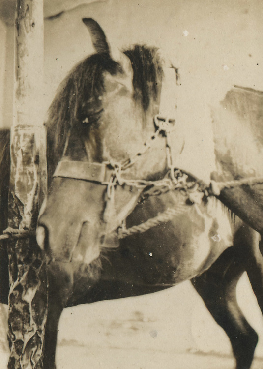 Japanese Vernacular or &quot;Found Photograph&quot;:<br /> <br /> Horse gazing into camera<br /> 1930s<br /> Anonymous<br /> <br /> - Vintage original gelatin silver print. <br /> - Size: 1 3/4 in. x 2 1/4 in. (43 mm x 58 mm).<br /> <br /> Price &yen;7000 JPY<br /> <br /> <br /> <br /> <br /> <br /> <br /> <br /> <br /> <br /> <br /> <br /> <br /> <br /> <br /> <br /> <br /> <br /> <br /> <br /> <br /> <br /> <br /> <br /> <br /> <br /> <br /> <br /> <br /> <br /> <br /> <br /> <br /> <br /> <br /> <br /> <br /> <br /> <br /> <br /> <br /> <br /> <br /> <br /> <br /> <br /> <br /> <br /> <br /> <br /> <br /> <br /> <br /> <br /> <br /> <br /> <br /> <br /> <br /> <br /> <br /> <br /> <br /> <br /> <br /> <br /> <br /> <br /> <br /> <br /> <br /> <br /> <br /> <br /> <br /> <br /> <br /> <br /> <br /> <br /> <br /> <br /> <br /> .