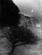 Trees and moonlight 1940s