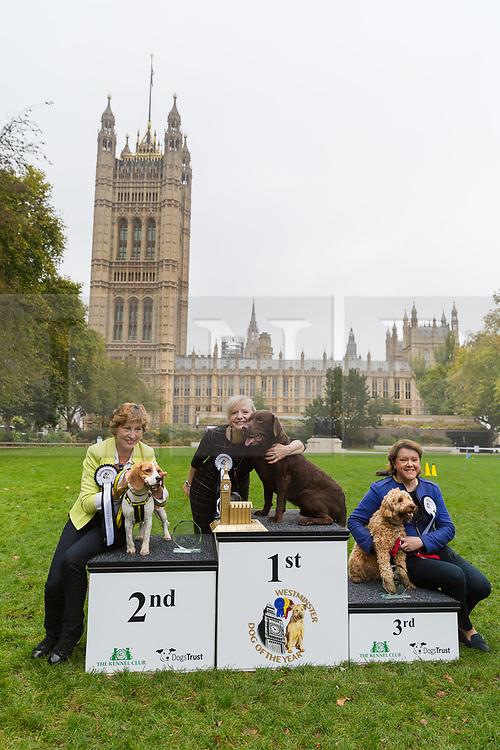 Victoria Kennel Club Dog Show