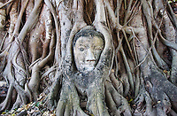A Buddha head overgrown with tree roots, Wat Mahathat Ayutthaya, Thailand