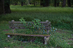 bench covered with plants and moss in the woods