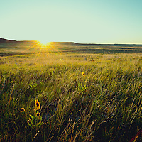 frenchman creek area montana, sunrise and prairie flowers