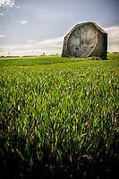 4.5 metre high WW1 concrete acoustic mirror near Kilnsea Grange, East Yorkshire, UK. The pipe which held the 'collector head' (microphone) can be seen in front of the structure