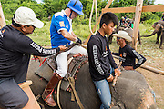 "29 AUGUST 2013 - HUA HIN, PRACHUAP KHIRI KHAN, THAILAND: A member of the Citibank team gets saddled up on his elephant before playing the Sata Story Design team. Citibank lost to Sara Story in the King's Cup Elephant Polo Tournament in Hua Hin. The tournament's primary sponsor in Anantara Resorts and the tournament is hosted by Anantara Hua Hin. This is the 12th year for the King's Cup Elephant Polo Tournament. The sport of elephant polo started in Nepal in 1982. Proceeds from the King's Cup tournament goes to help rehabilitate elephants rescued from abuse. Each team has three players and three elephants. Matches take place on a pitch (field) 80 meters by 48 meters using standard polo balls. The game is divided into two 7 minute ""chukkas"" or halves. There are 16 teams in this year's tournament, including one team of transgendered ""ladyboys.""    PHOTO BY JACK KURTZ"