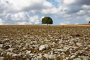 Israel, Golan Heights lone tree
