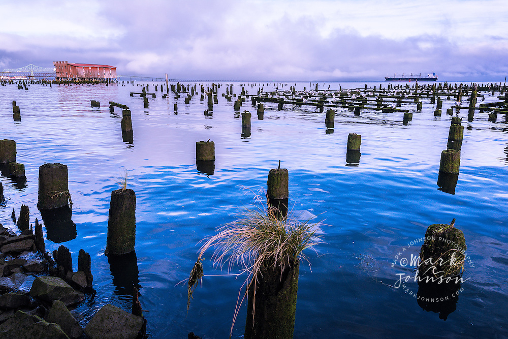 Old cannery, pilings & seabirds, Columbia River, Astoria, Oregon, USA