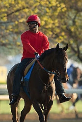 Exercise rider Adrian Bennett worked Rock Hard Cat Tuesday, April 30, 2013 at Churchill Downs in Louisville. Photo by Jonathan Palmer