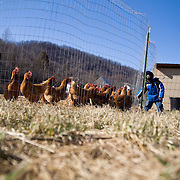 Eli, of Appalachia Star Farm, feeds chickens. The farm operates a CSA and sells vegetables at their farm stand.