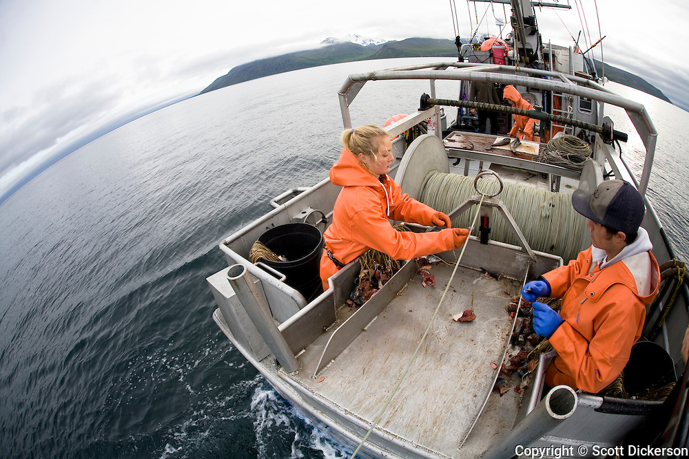 Emma Teal Laukitis and Keith Bell snap hooks onto longline gear as it is set out while fishing for halibut in the Aleutian Islands, Alaska.