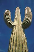 Organ Pipe Cactus National Monument. April 2000.