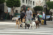 Dog walker Mid Afternoon Spring Street Intersection.