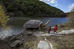 October 4, 2017 - Jilin, Jilin, China - Jilin,CHINA-3rd October 2017: (EDITORIAL USE ONLY. CHINA OUT) ..Giant turtle sculptures can be seen at Wujia Mountain in Jilin, northeast China. (Credit Image: © SIPA Asia via ZUMA Wire)