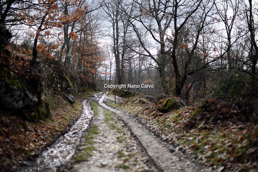 Forest trail in Vigo de Sanabria, Zamora, Spain