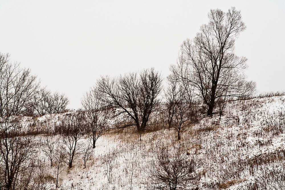Deciduous trees on a hillside in the winter.