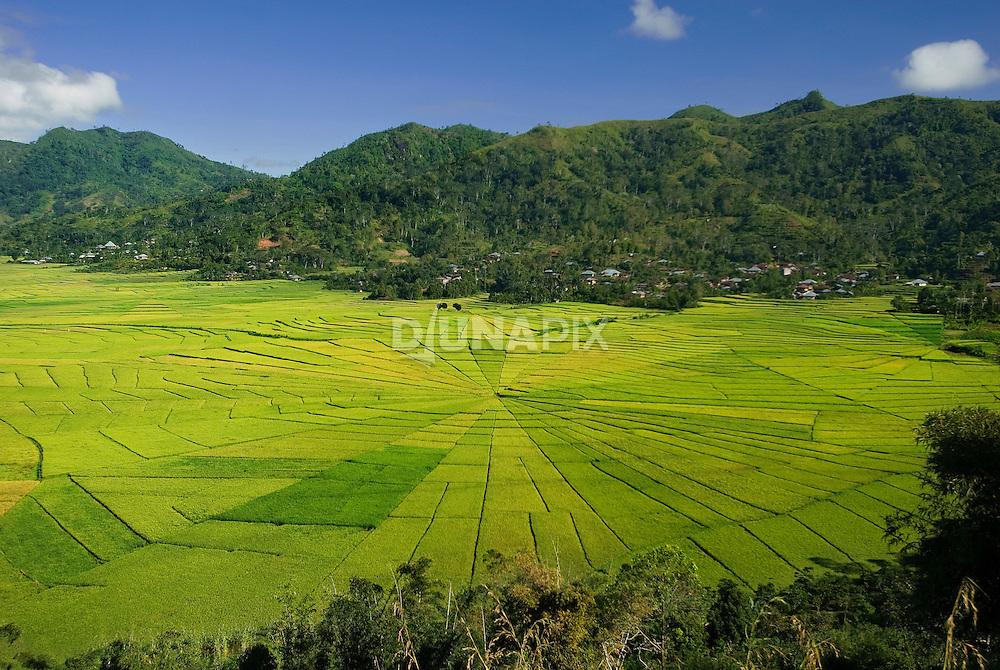 Wide view of spiderweb rice field, near Cancar, Manggarai, Flores.