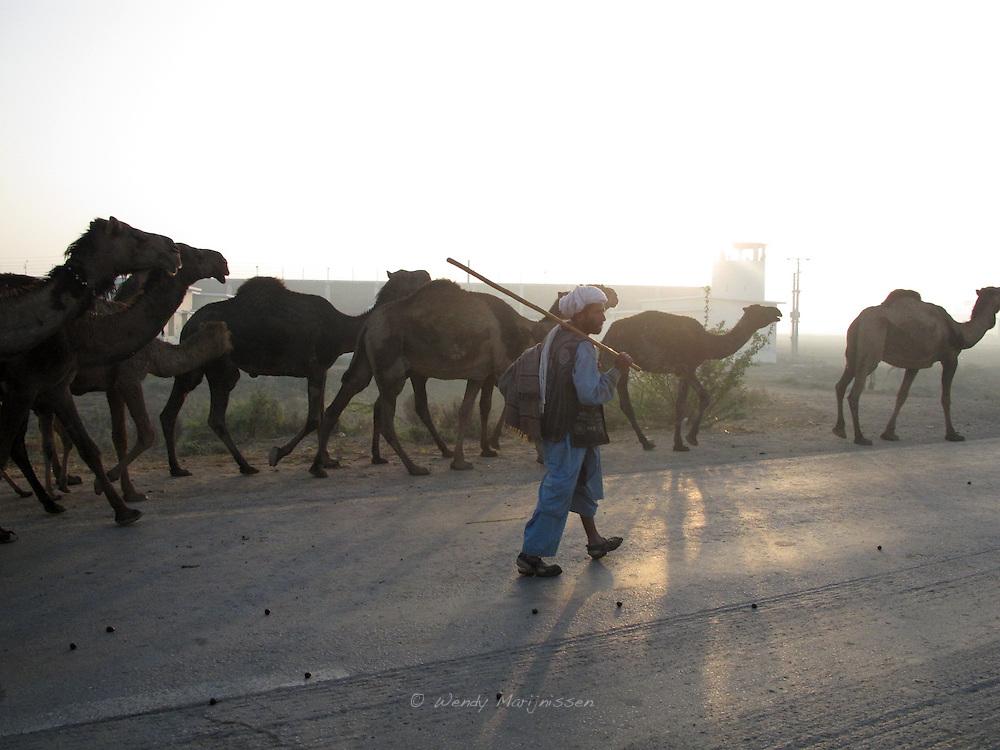 A man is walking along his herd of camels. Jafferabad, Balochistan, Pakistan 2010