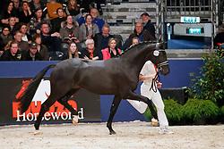 523, Kingston JZ<br /> KWPN Stallionshow - 's Hertogenbosch 2018<br /> © Hippo Foto - Dirk Caremans<br /> 03/02/2018