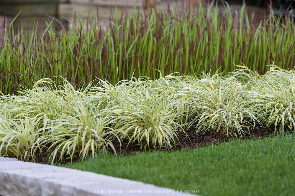 Golden japanese forest grass hakonechloa macra 39 aureola for Ornamental japanese grass