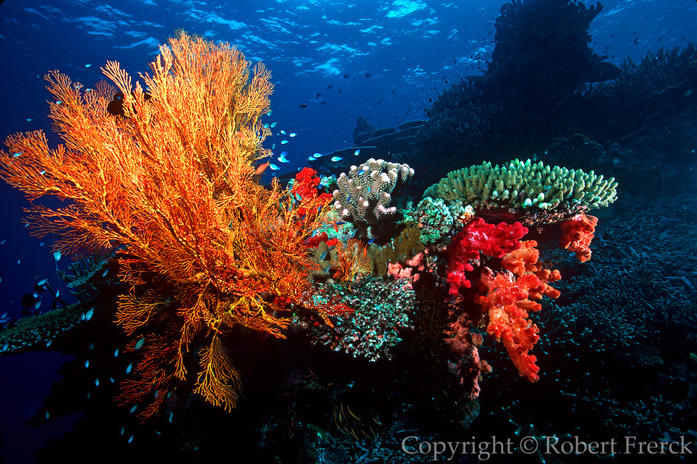 UNDERWATER MARINE LIFE WEST PACIFIC; Fiji Reef environment with hard and soft corals, sea fans and fish
