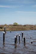 Big Branch National Wildlife Refuge