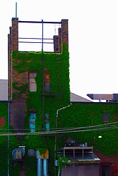 05 June 2014:   Downtown Bloomington. not sure the name of the building, but it is the rear and has moss growing profusely on the brick.