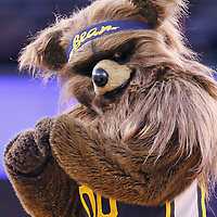25 January 2016: Jazz Bear, the mascot for the Utah Jazz, is seen during the Detroit Pistons 95-92 victory over the Utah Jazz, at the Vivint Smart Home Arena, Salt Lake City, Utah, USA.