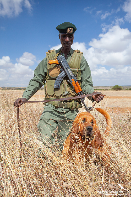 A tracker dog in action in northern Kenya