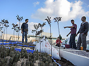 Rooftop garden. As urban land is in short supply roof top gardens are a solution that will allow inhabitants to grow flowers and vegetables in currently unclaimed unused areas