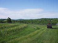 Harmony Farm, Goshen, NY  - vegetable field showing garlic plants