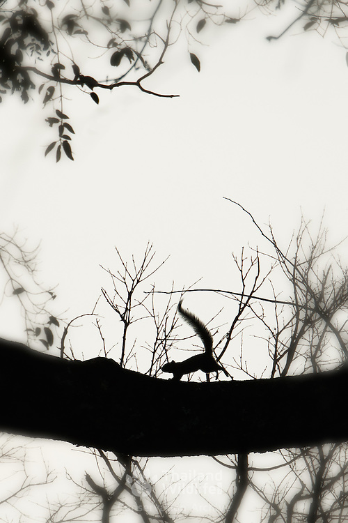 Silhouette of a squirrel in a tree.