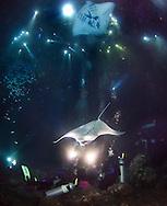 Manta Ray night dive in Hawaii.