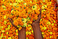 Inde, Bengale Occidental, Calcutta (Kolkata), le marche aux fleurs // India, West Bengal, Kolkata, Calcutta, Mullik Ghat flower market