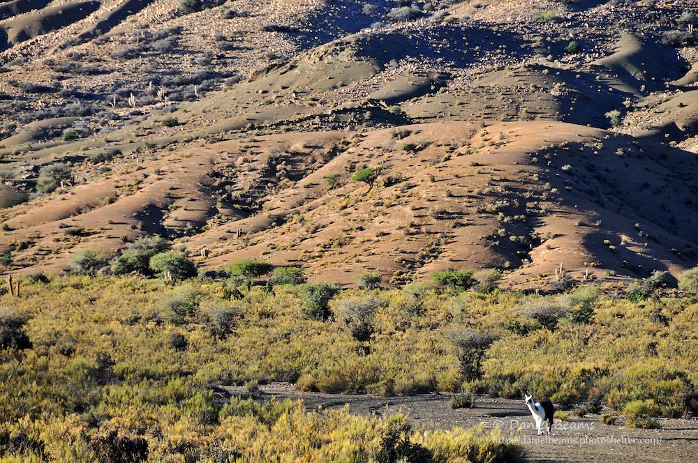 Desert landscape in Potosi, Bolivia