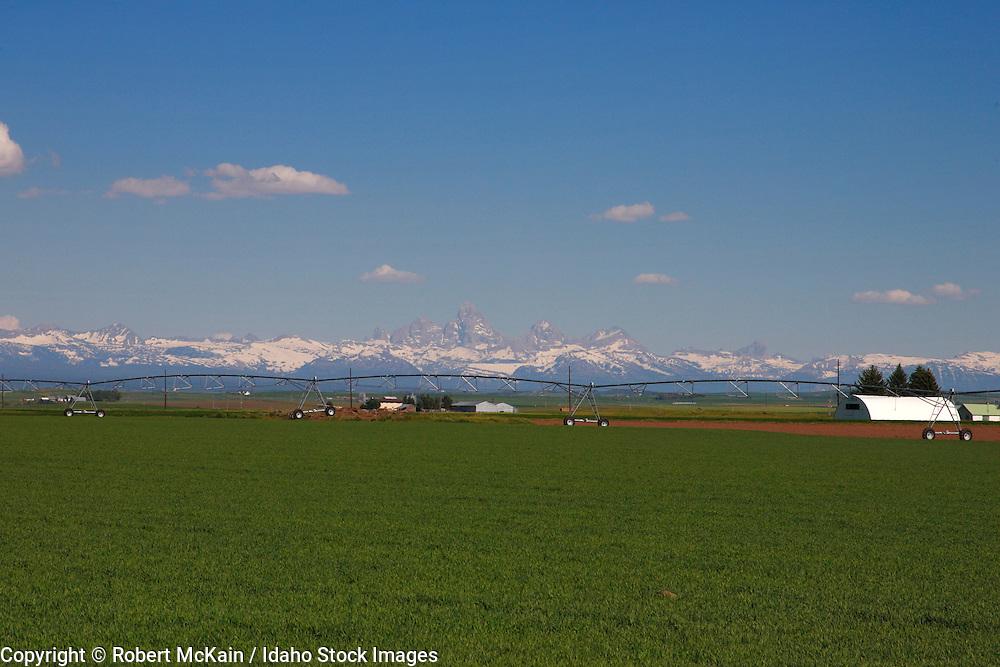 IDAHO. Teton Scenic Byway, near Ashton. Teton mountain range with wheat fields in foreground. June 2008 #ls080001