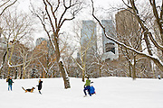 People and dogs play in Central Park, Manhattan, New York City during winter snowstorm.