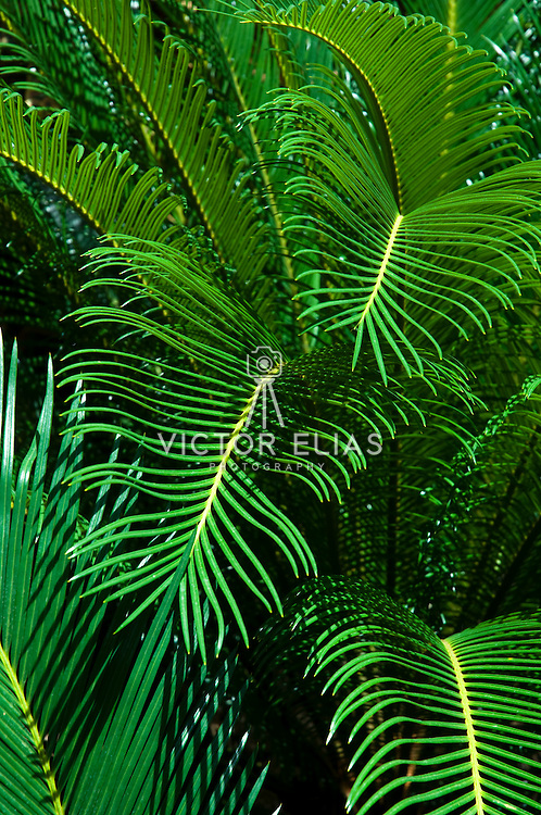 Palm leaves. Cancun, Mexico.