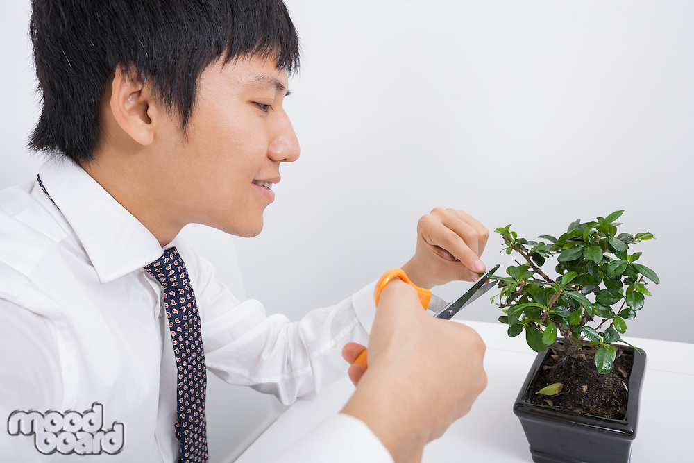Happy mid adult businessman pruning pot plant in office