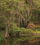 MAGNOLIA PLANTATION AND GARDENS,Charleston,South Carolina