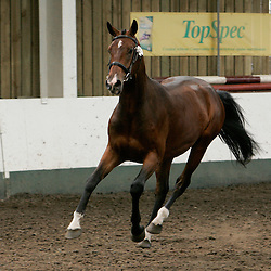 BEF Futurity July 2012  Richmond EC<br /> Hugo<br /> Highest Score of 2 yr old Showjumping Category and Highest Overall 2 yr old score