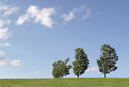 Salisbury Mills, N.Y.  - Three trees in a field with blue skies and fair-weather clouds in the background  on May 10, 2009.