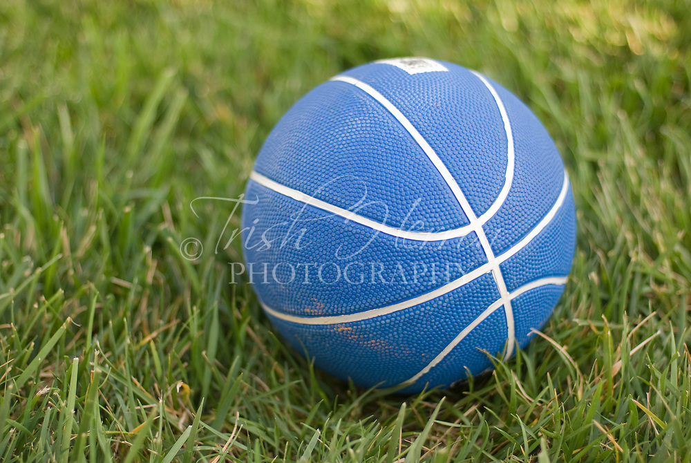 A blue basketball rests on a green lawn