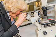 Her Royal Highness in the lab with researchers and looking at specemins through a microscope. The Duchess of Cornwall, Patron, Arthritis Research UK, visits and meets patients of the Adolescent Inpatient Unit at University College London Hospitals.  •Her Royal Highness then tours a laboratory at the Arthritis Research UK Centre for Adolescent Rheumatology and meeting researchers and supporters. London 12 Feb 2015.
