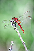 A dragonfly sits on a lone twig.