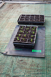 Heated mat propagator with seed trays on greenhouse bench providing bottom heat