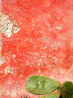 Paricolari campagna di Novoli, Lecce..Puglia, Salento