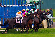"""""""Stacelita"""" with now retired sure to be Hall of Fame rider Ramon Dominguez aboard, leaves the gate in the Flower Bowl Handicap. A series of 4 shots. 2011"""