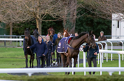 Horses in the pre parade ring at Kempton Park Racecourse, Esher.