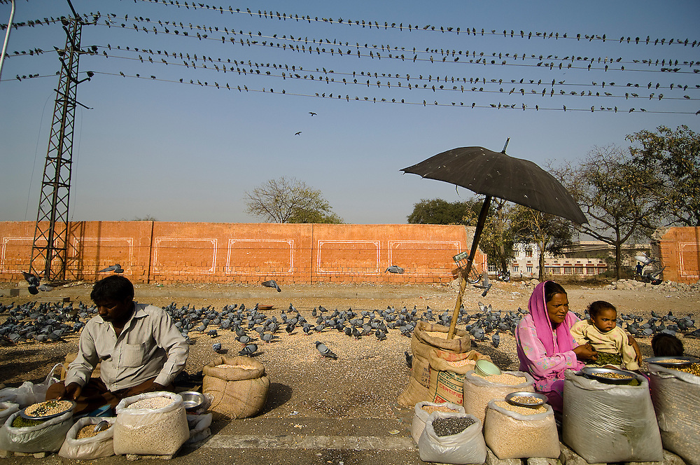 Merchants, selling their products under electric wires filled with pigeons. Jaipur, Rajasthan, India.