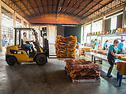"16 DECEMBER 2014 - CHUM SAENG, RAYONG, THAILAND: A forklift is used to move sorted and inspected smoked rubber sheets into a warehouse on a large rubber plantation near Chum Saeng, Thailand. Thailand is the second leading rubber exporter in the world. In the last two years, the price paid to rubber farmers has plunged from approximately 190 Baht per kilo (about $6.10 US) to 45 Baht per kilo (about $1.20 US). It costs about 65 Baht per kilo to produce rubber ($2.05 US). Prices have plunged 5 percent since September, when rubber was about 52Baht per kilo. Some rubber farmers have taken jobs in the construction trade or in Bangkok to provide for their families during the slump. The Thai government recently announced a ""Rubber Fund"" to assist small farm owners but said prices won't rebound until production is cut and world demand for rubber picks up.    PHOTO BY JACK KURTZ"